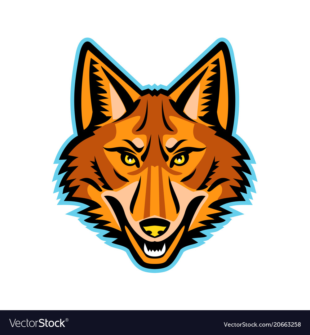 Coyote head front mascot vector image