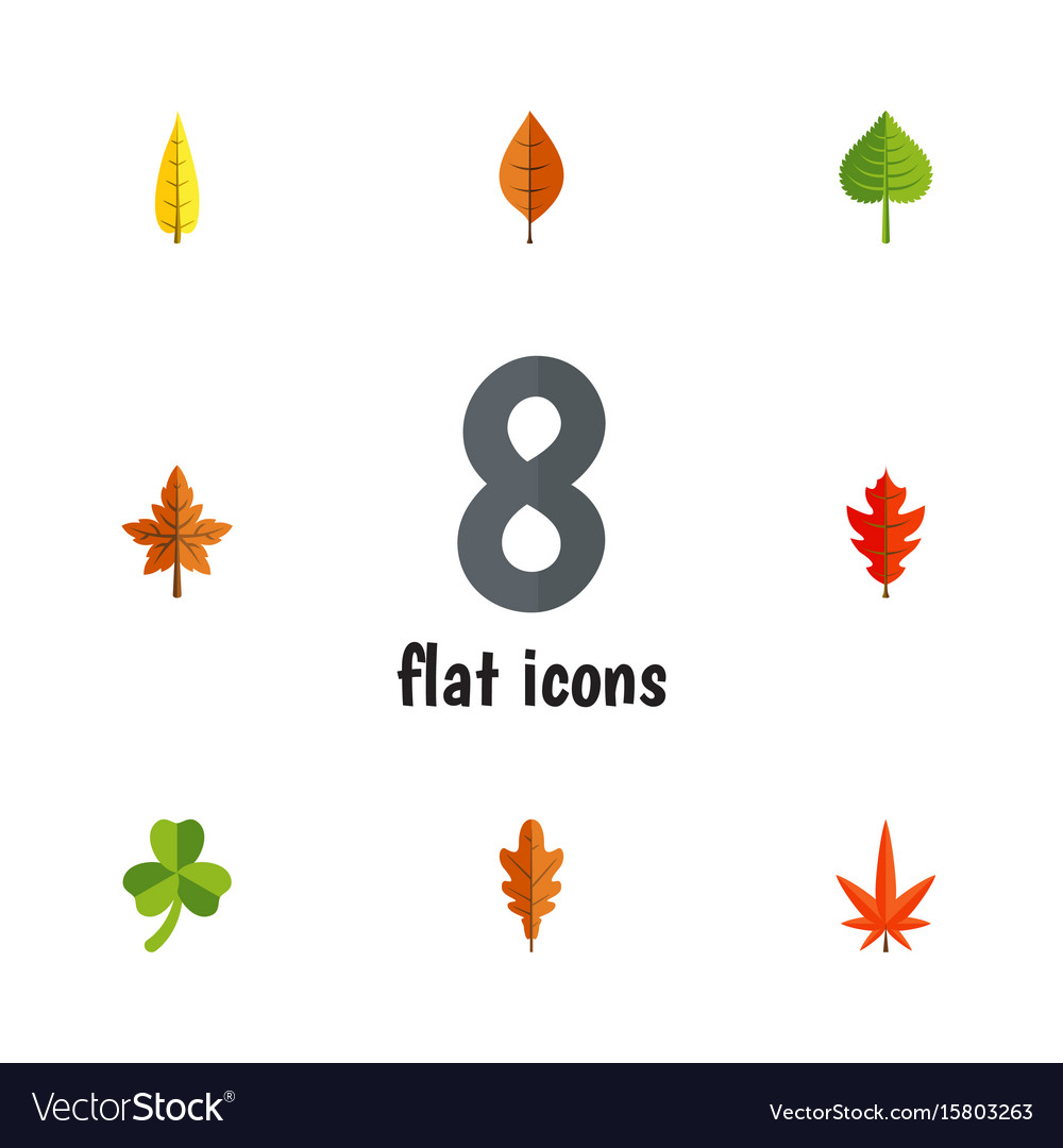Flat icon foliage set of linden frond alder and