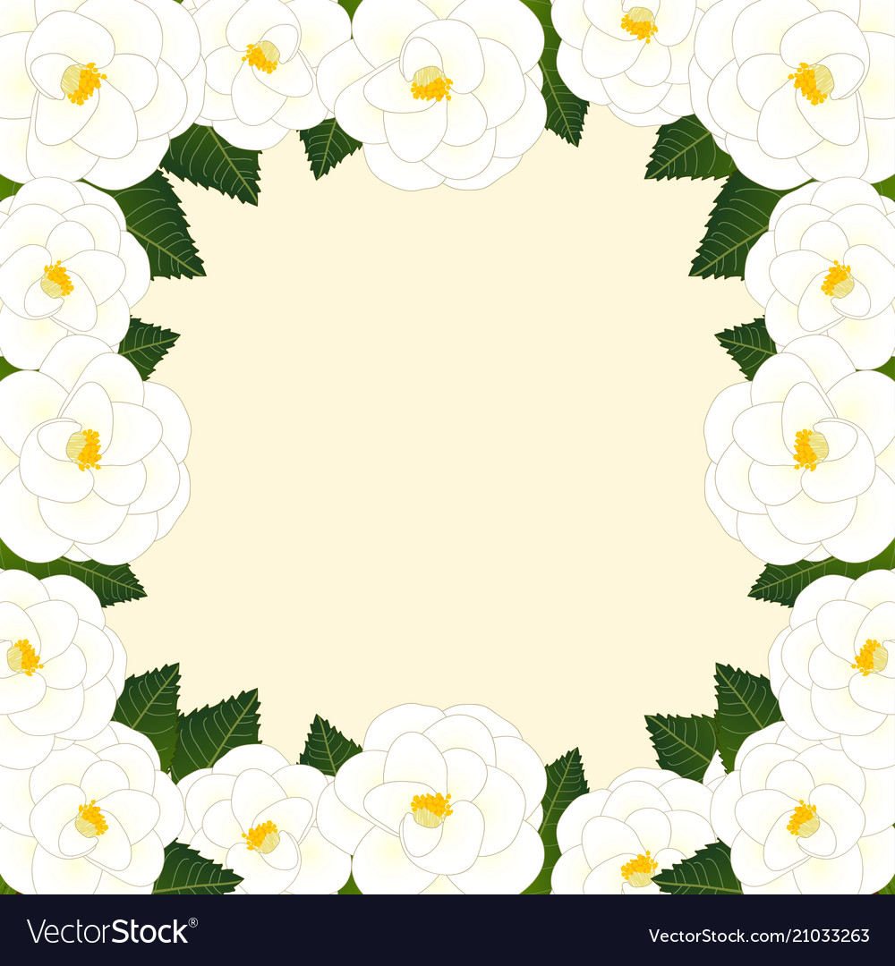 White Camellia Flower Frame Border Royalty Free Vector Image