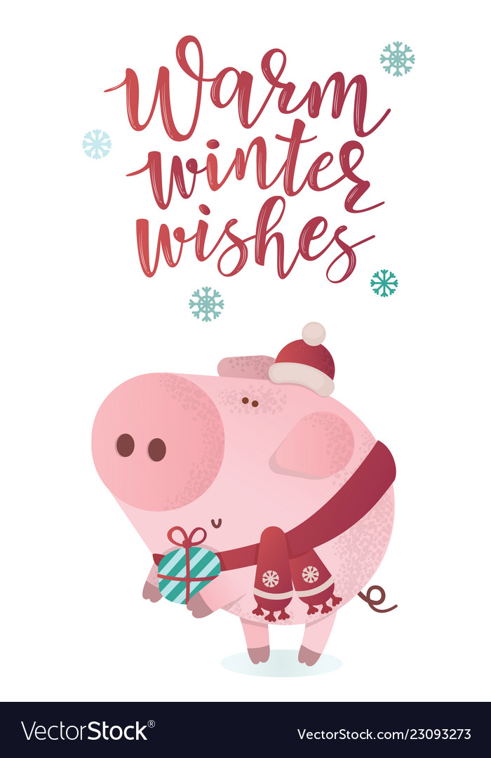 Cute piggy in a winter scarf with a present