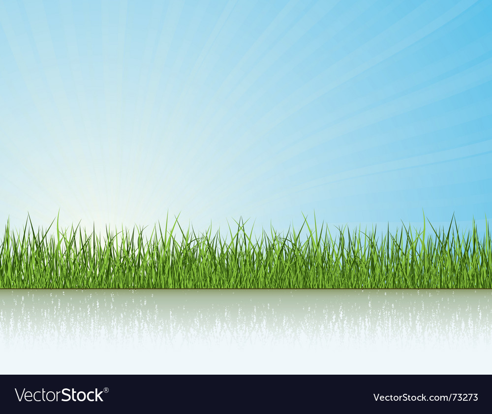 Grass under the sunlight vector image