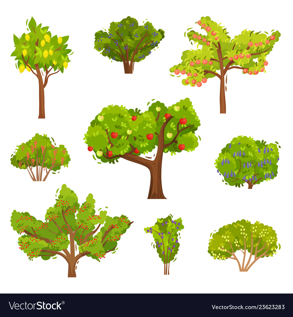 Different Fruit Trees Sorts With Names Set, Garden Trees And.. Royalty Free  Cliparts, Vectors, And Stock Illustration. Image 85576686.