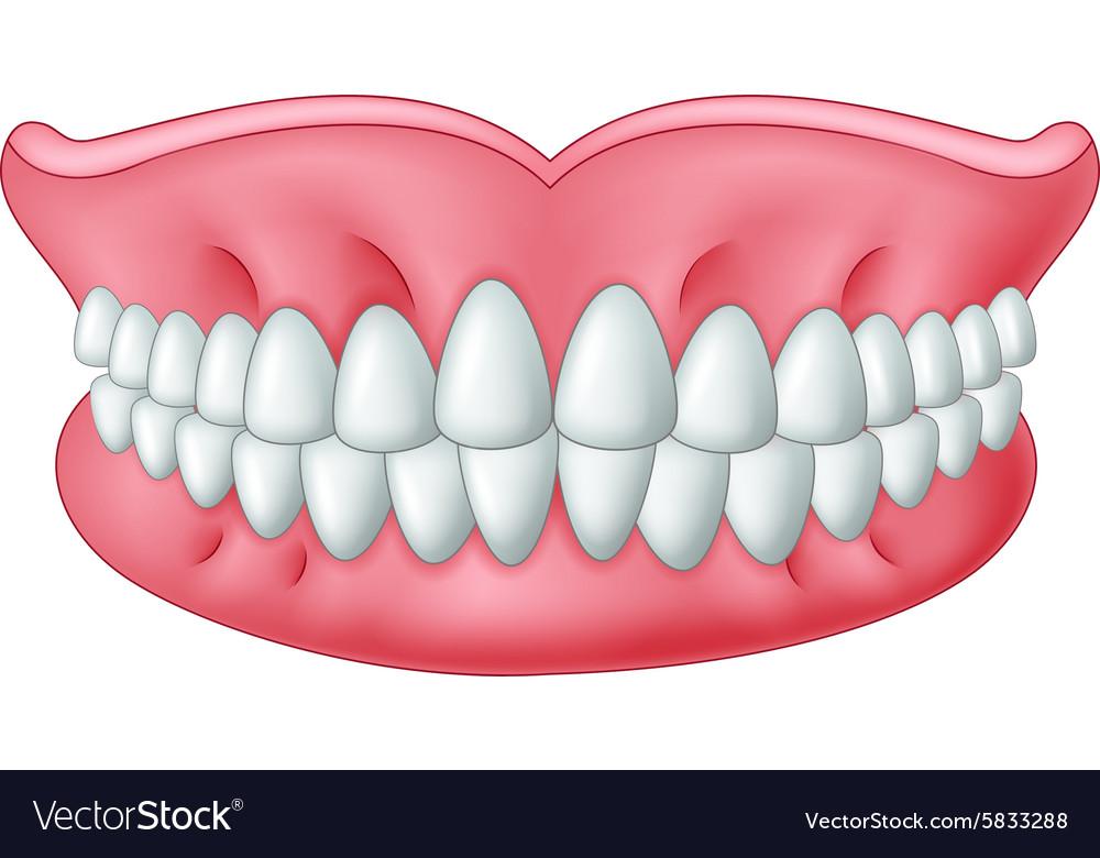 Cartoon model of teeth isolated on white backgroun