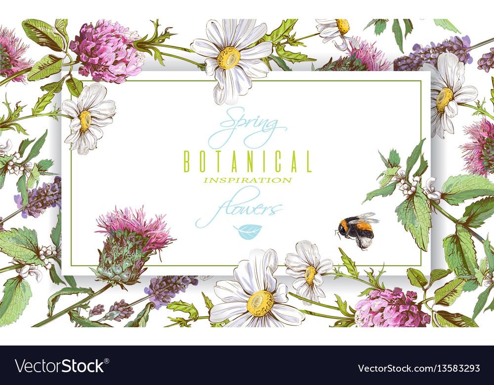 Herbal Horizontal Banner Royalty Free Vector Image