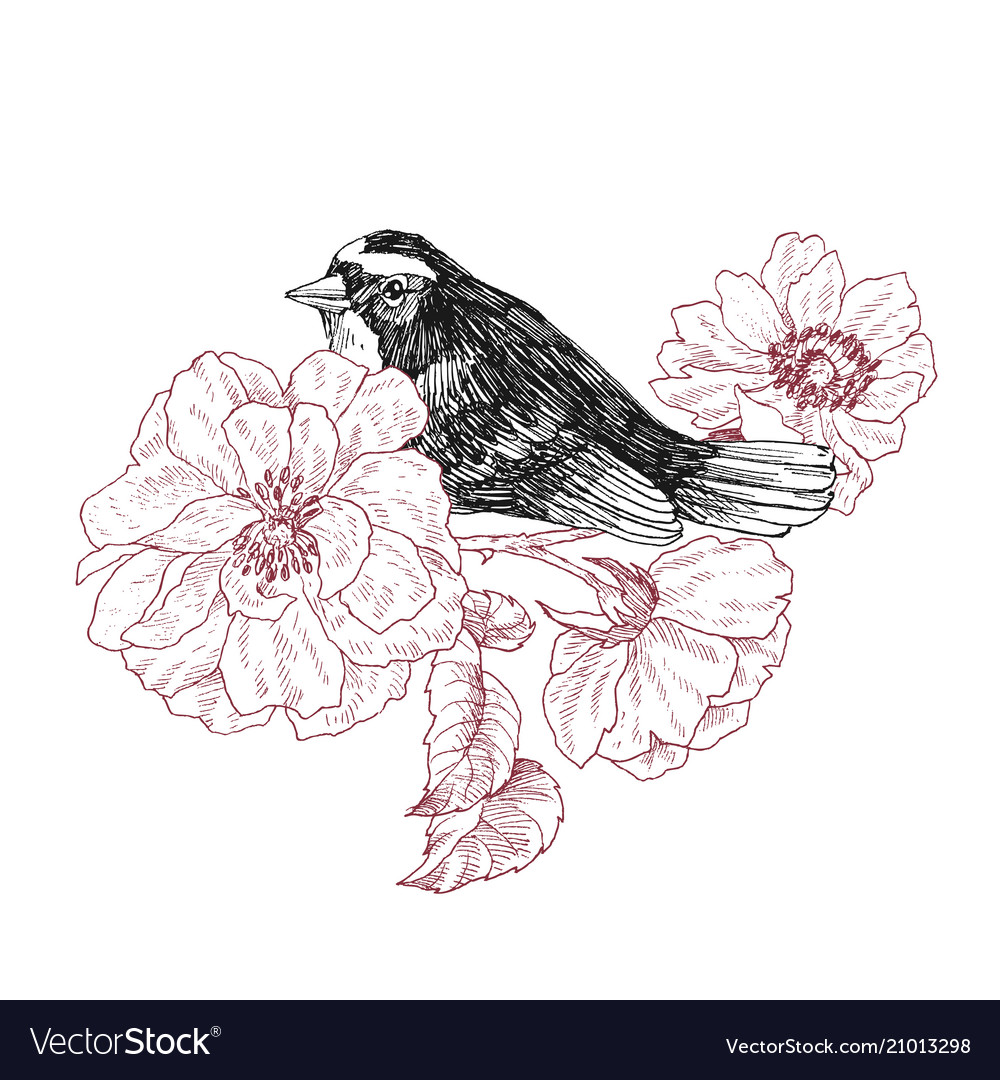 Bird hand drawn in vintage style with garden roses
