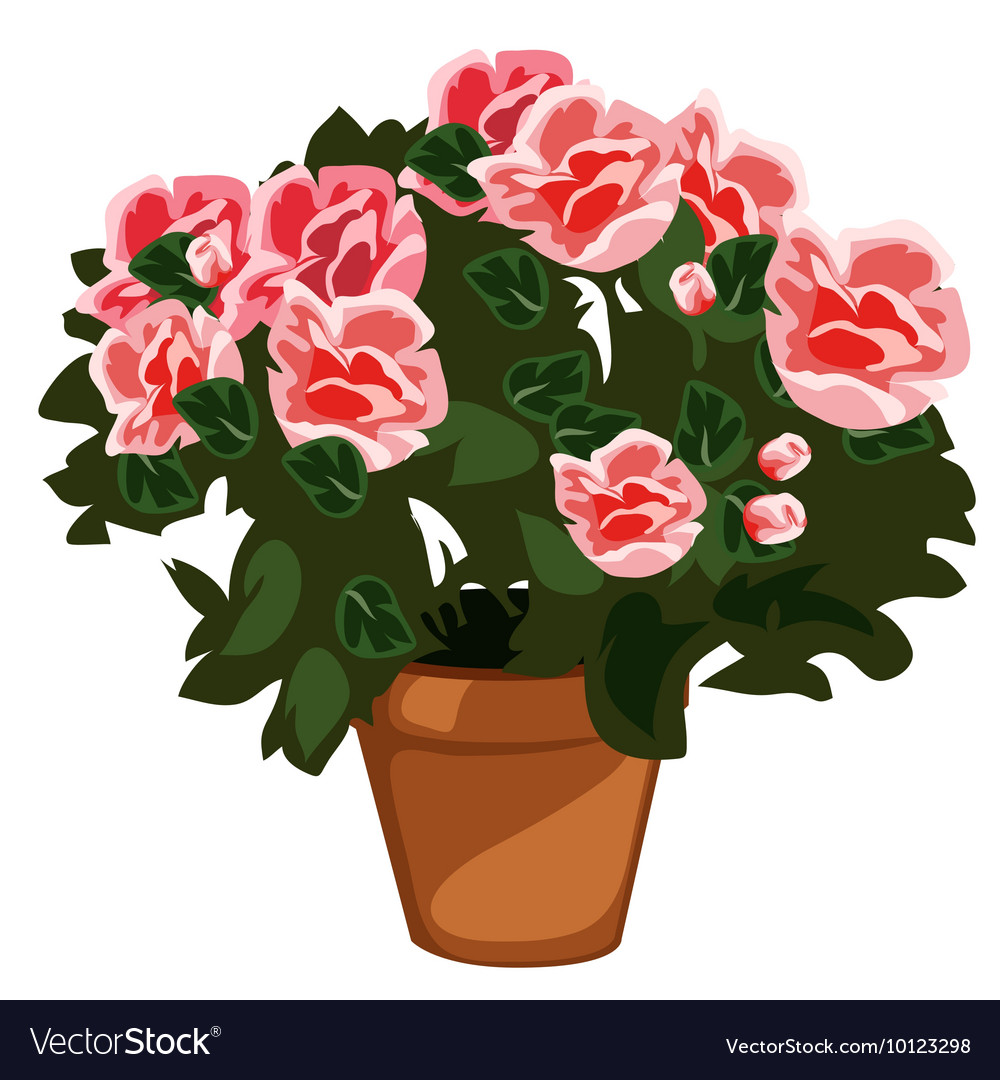 Decorative pink flowers in pot isolated vector image