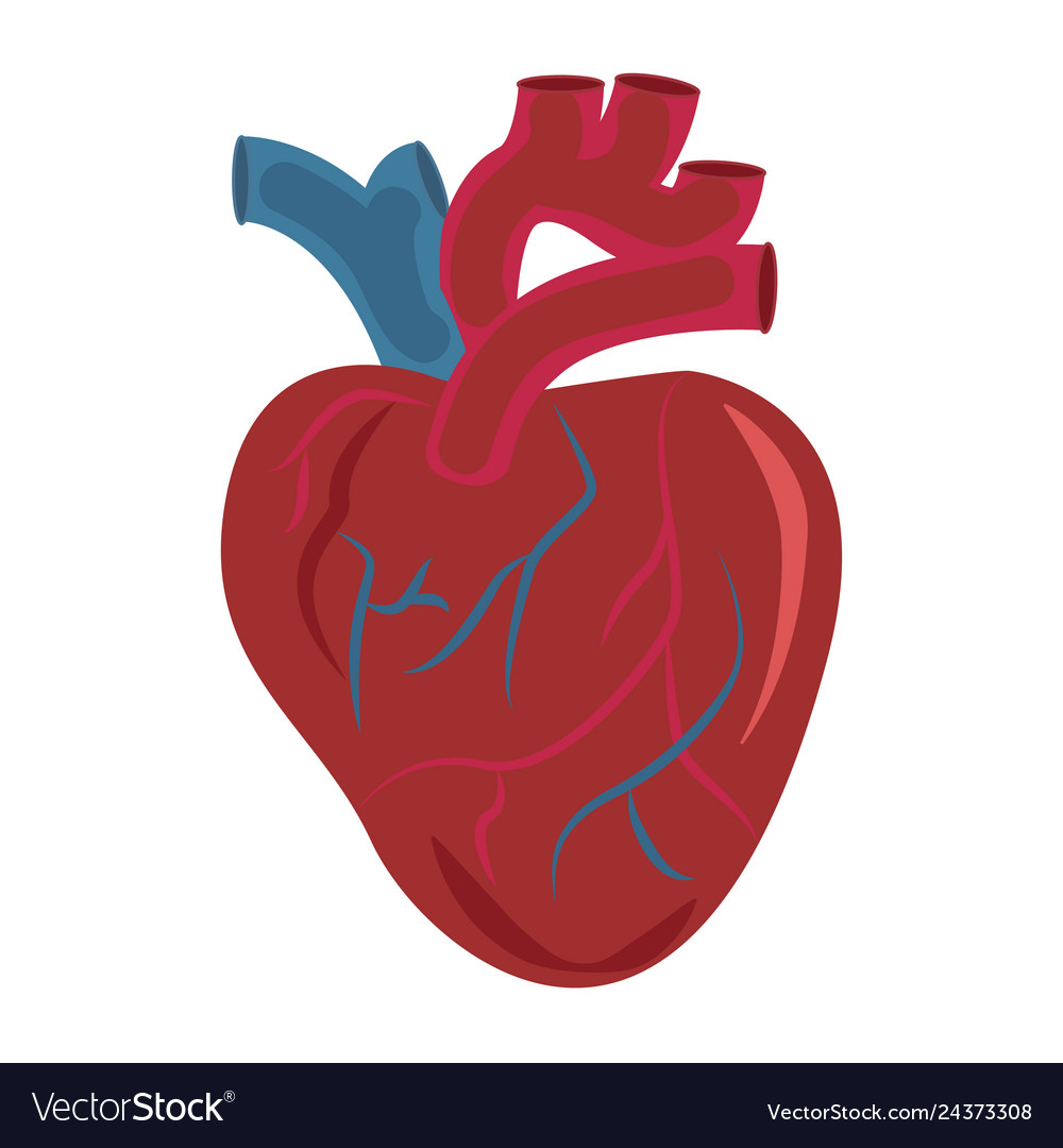 Human heart organ design icon medical