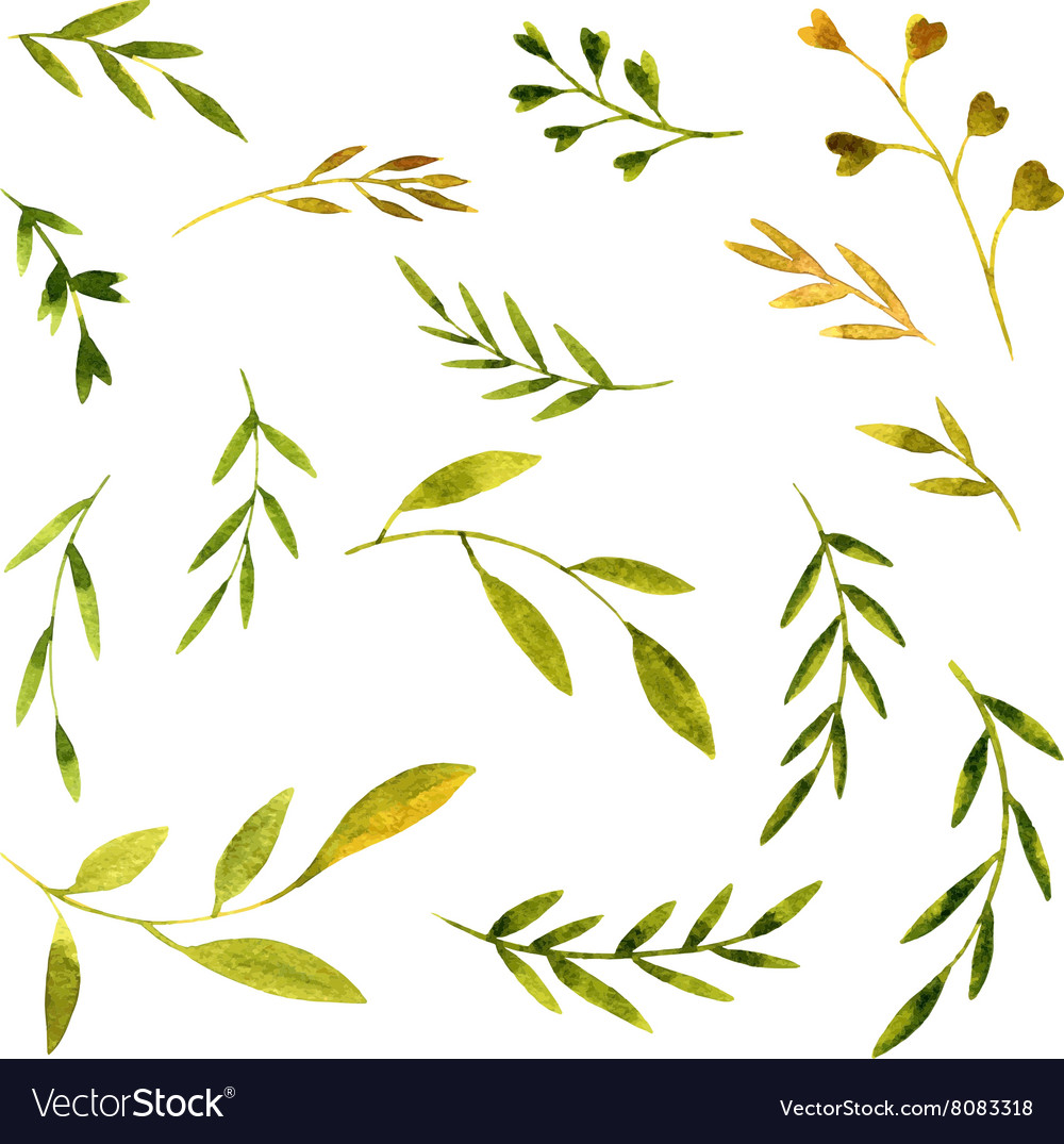 Watercolor green leaves and branches