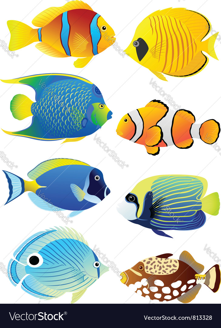 Tropical fishes pictures