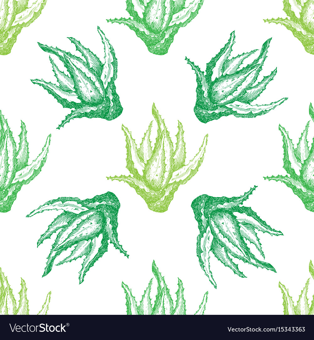 Pattern with aloe vera for decoration