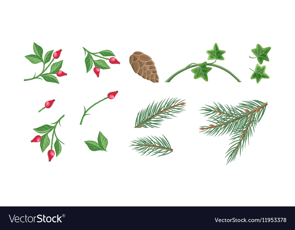 Set Of Christmas Decoration Plants Royalty Free Vector Image