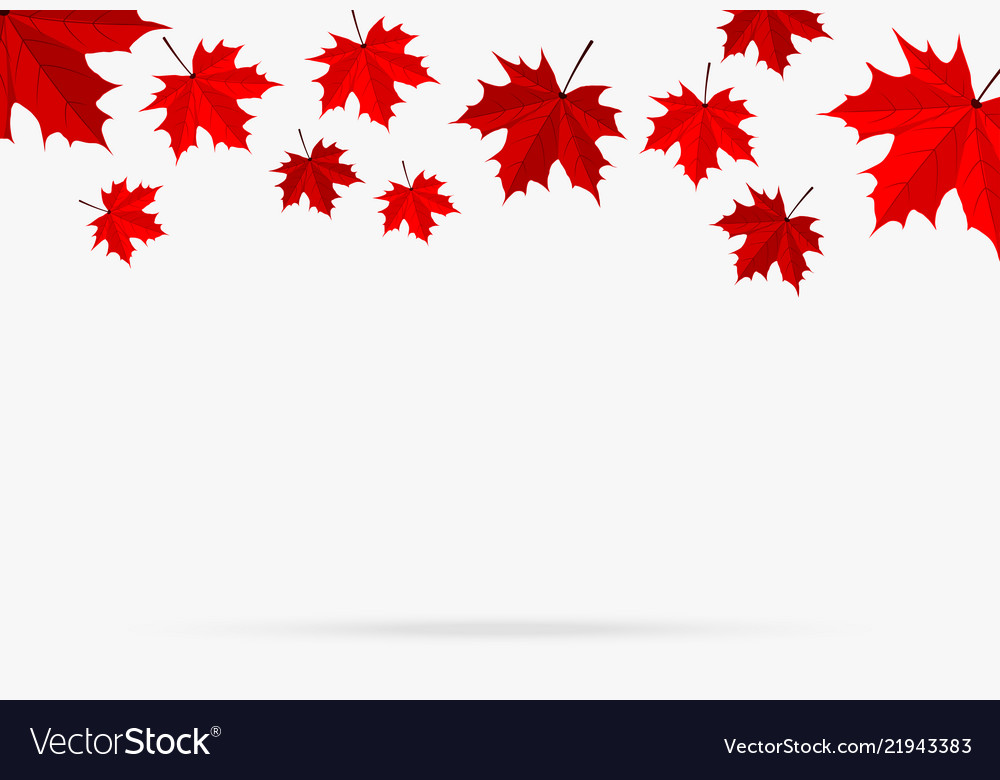 Autumn red maple leaf fall isolated on white