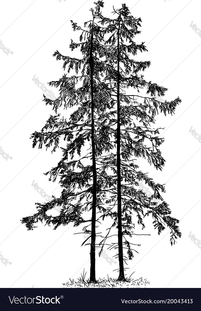 Cartoon spruce tree