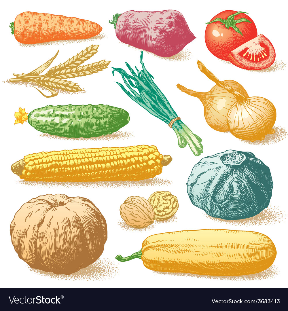 Vegetables fruits and plants hand drawn