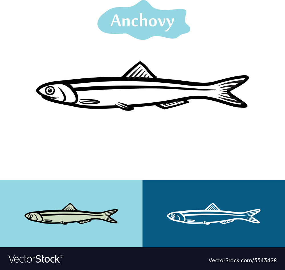 Anchovy silhouette logo