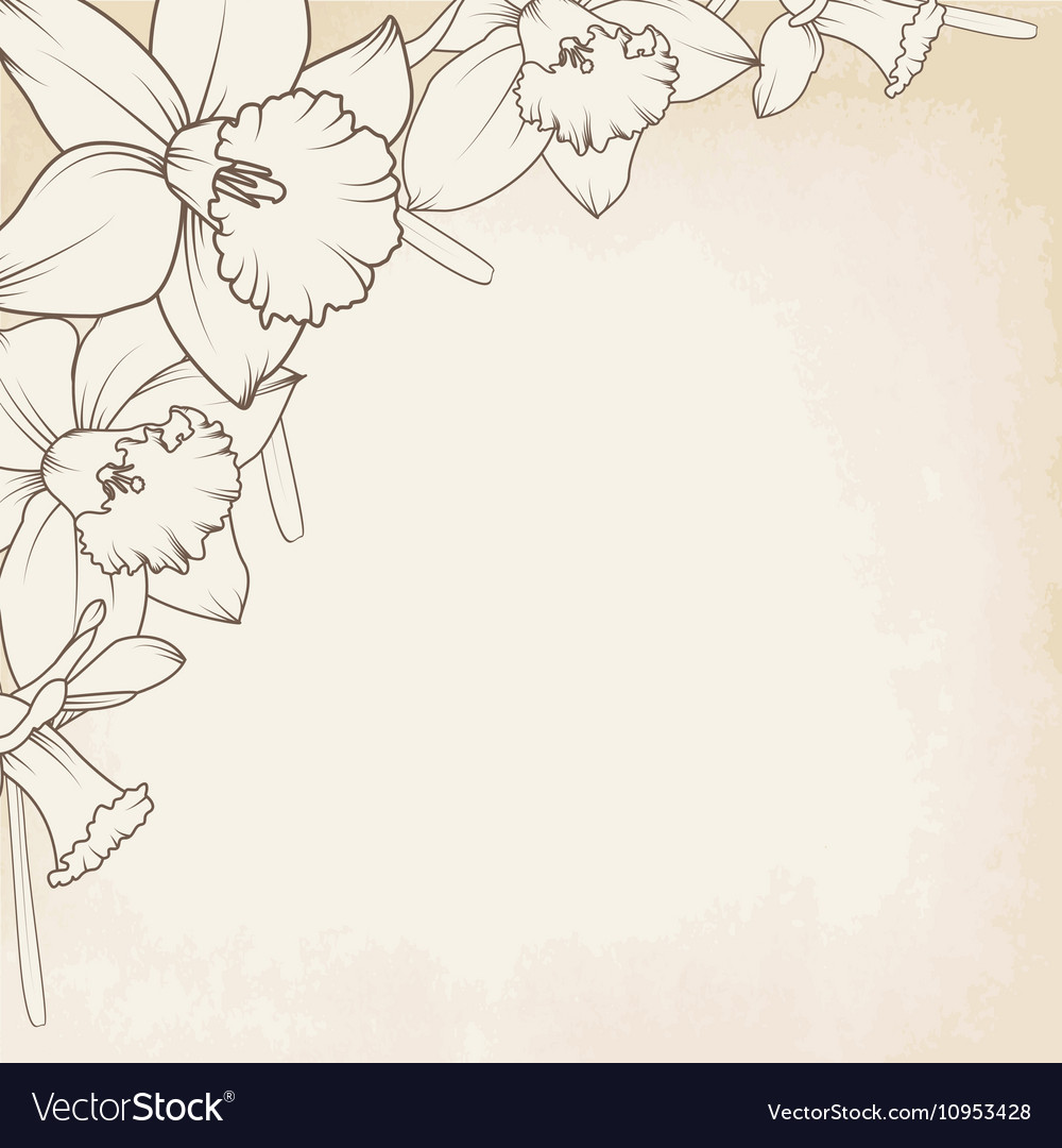 Narcissus daffodil flowers corner border element vector image