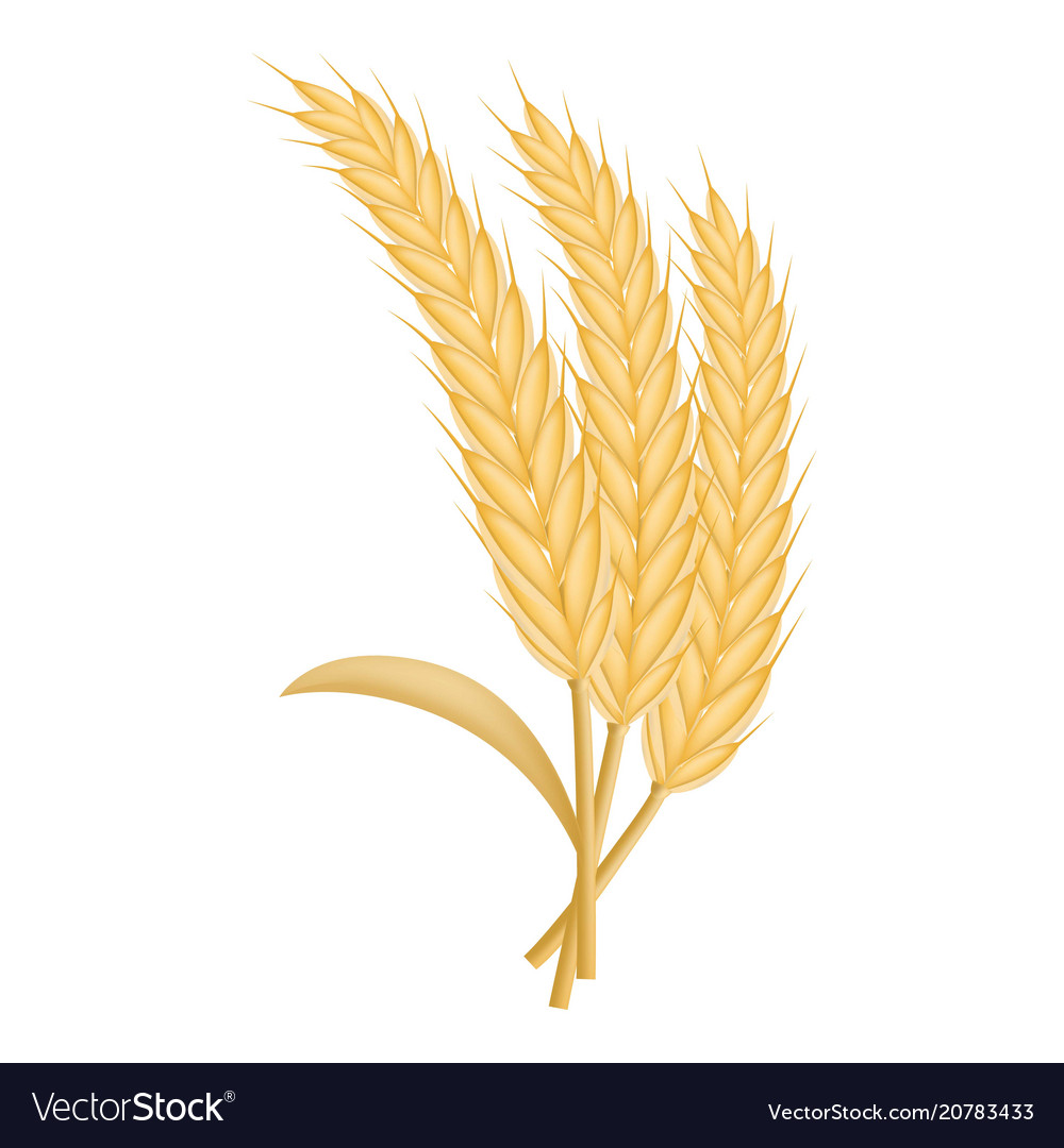 Eco wheat icon realistic style