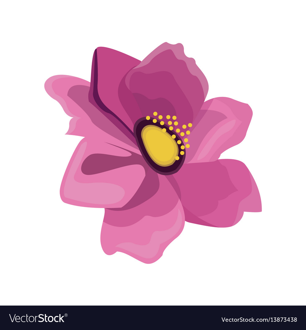 Pink anemone flower design royalty free vector image pink anemone flower design vector image mightylinksfo