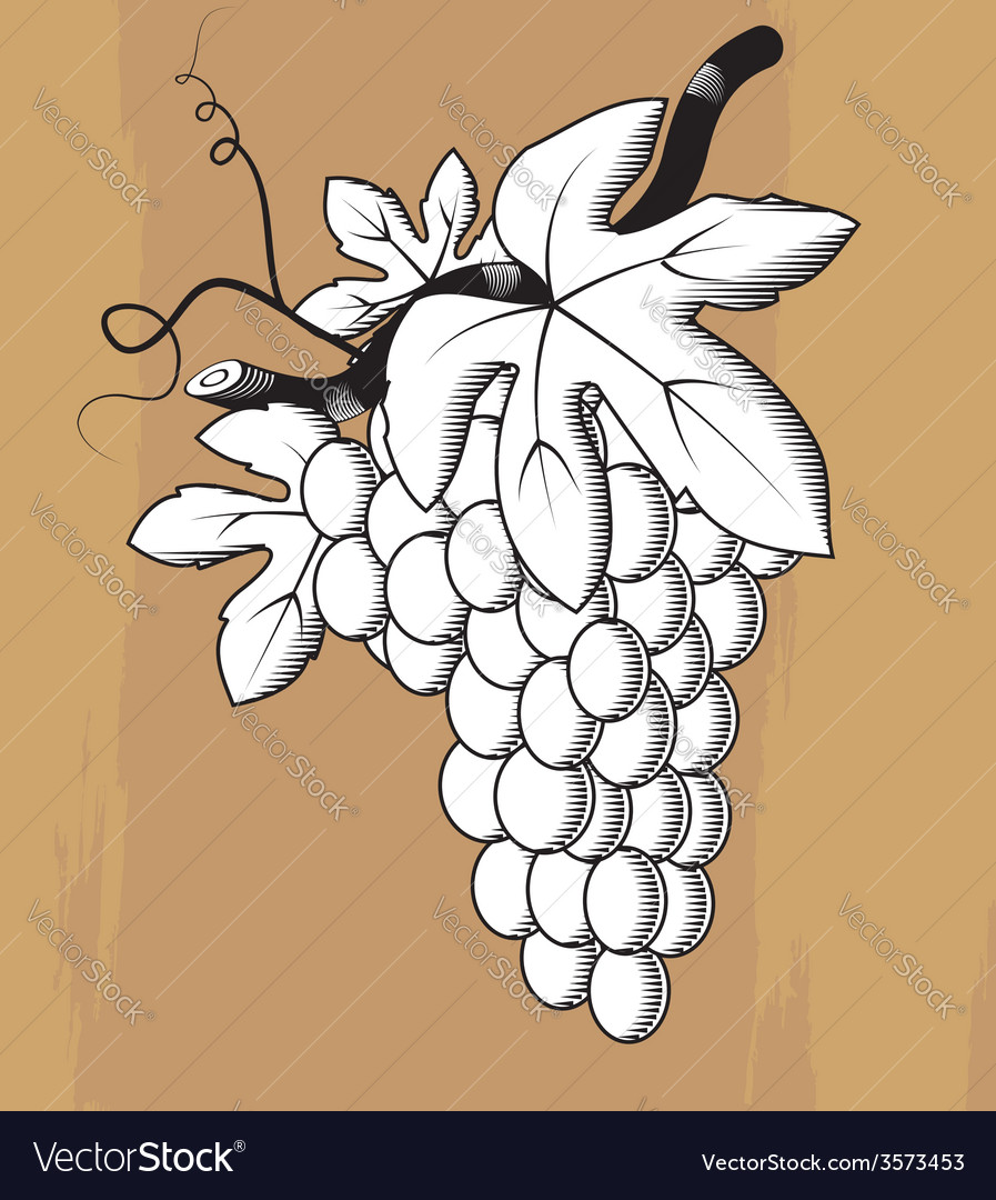 Woodcut styled bunch of grapes