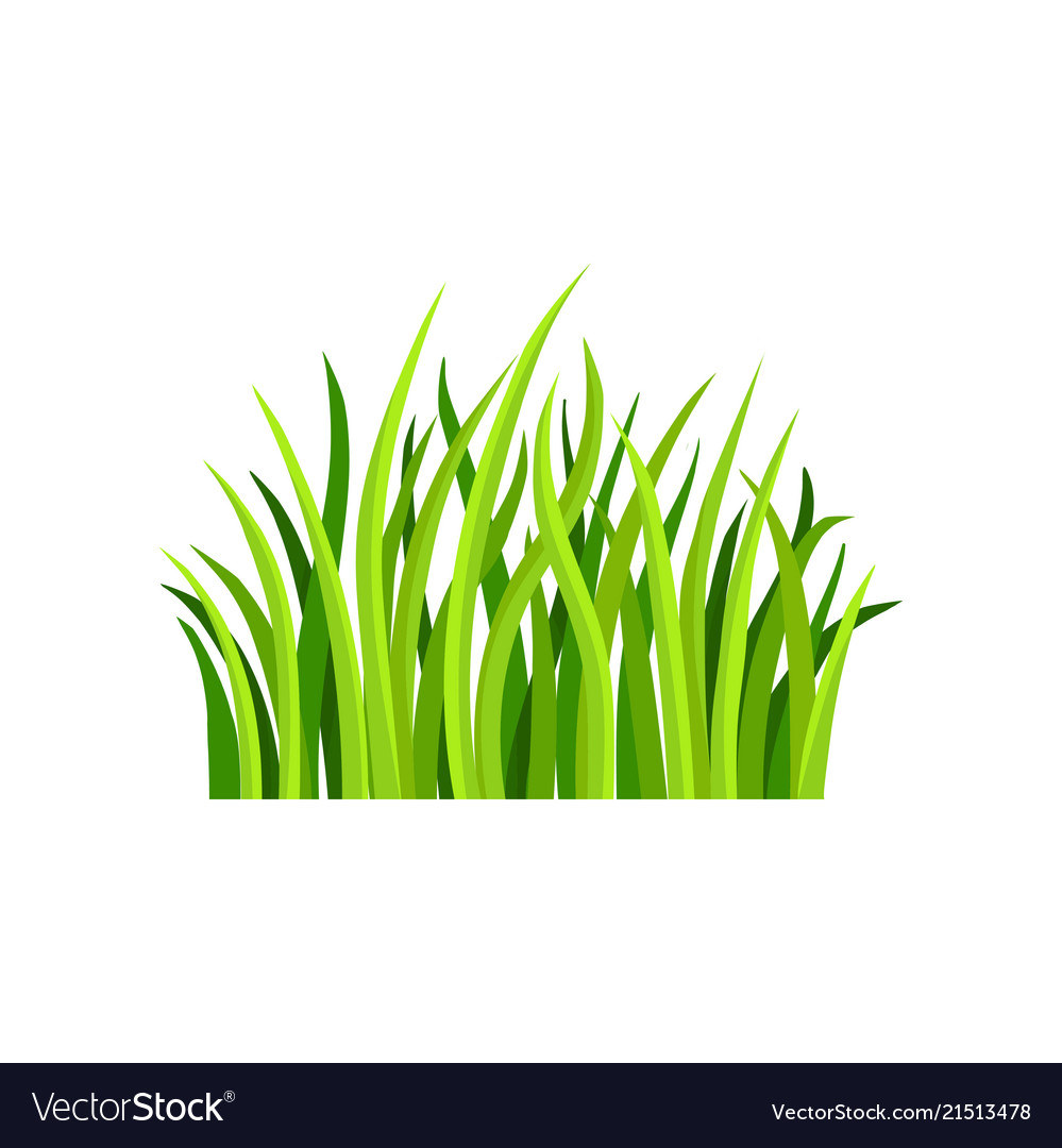 flat of fresh green grass royalty free vector image vectorstock