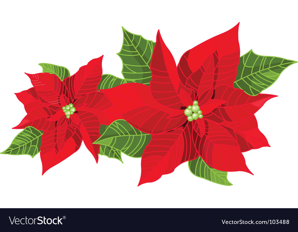 christmas decoration poinsettia vector image - Poinsettia Christmas Decorations