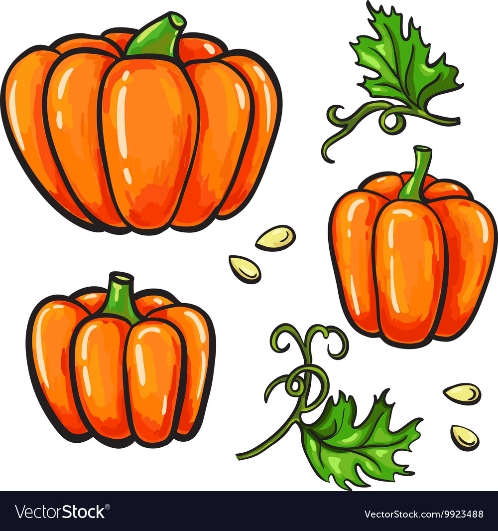 Pumpkin drawing set Isolated hand drawn