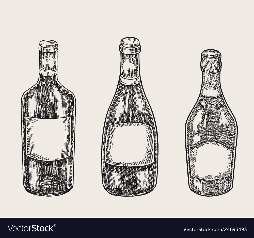 Hand drawn wine bottles in sketch style