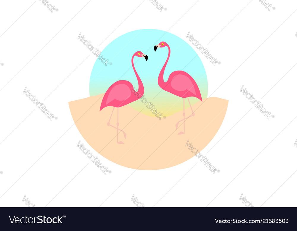Flamingo bird design on background minimal flat