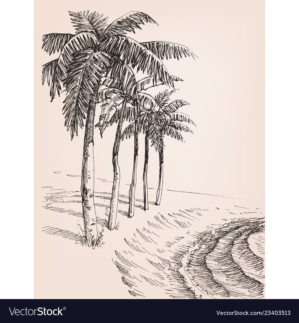 Palm trees on beach drawing