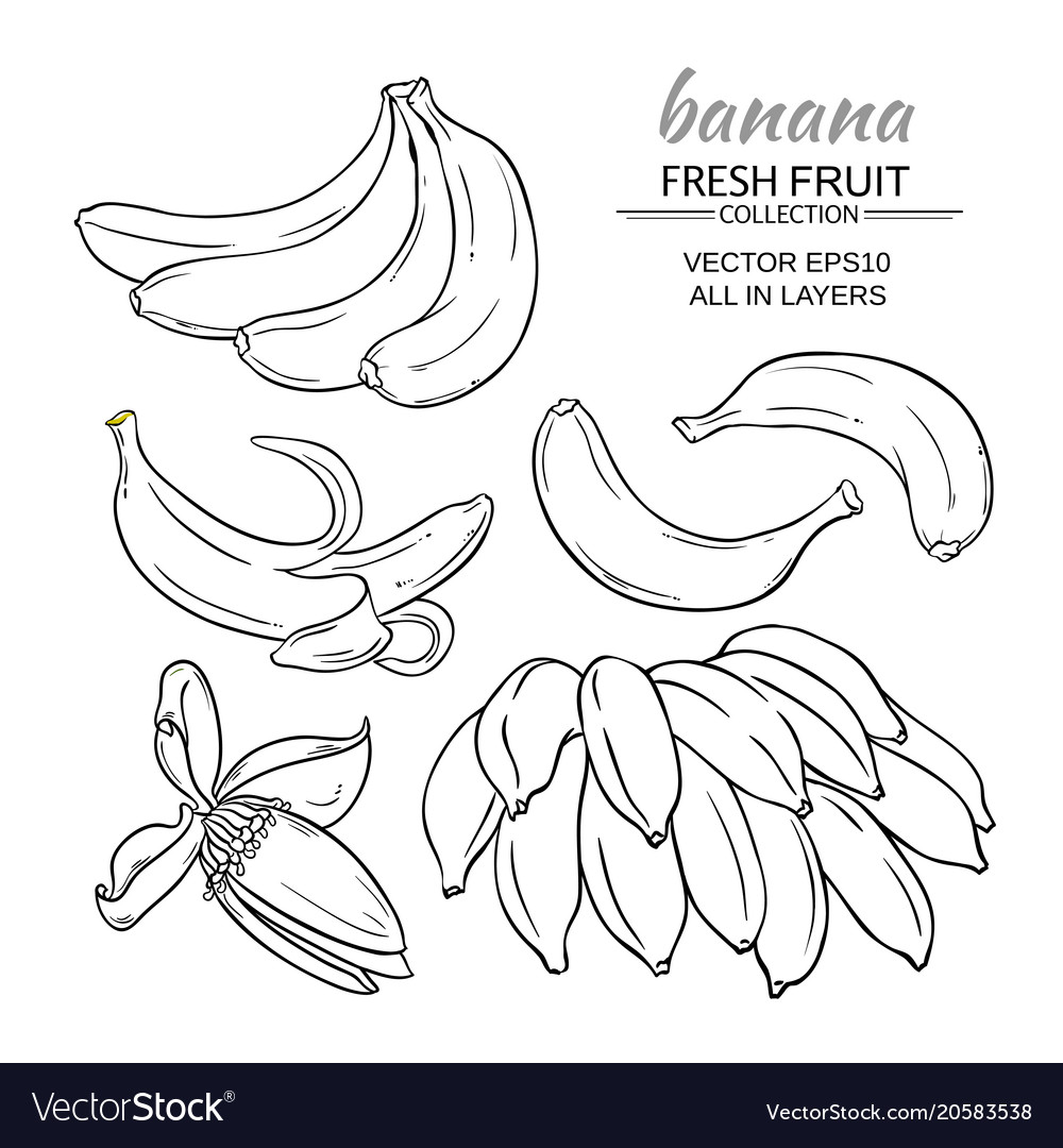 Banana fruits set