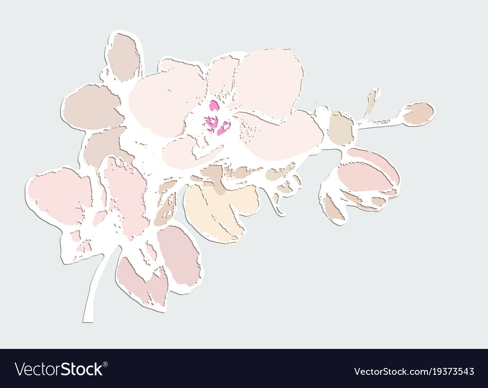 Delicate orchid flower on a blue background vector image