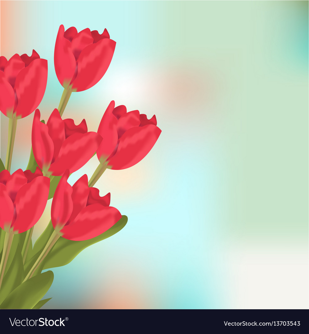 Spring text with red tulips flower bouquet