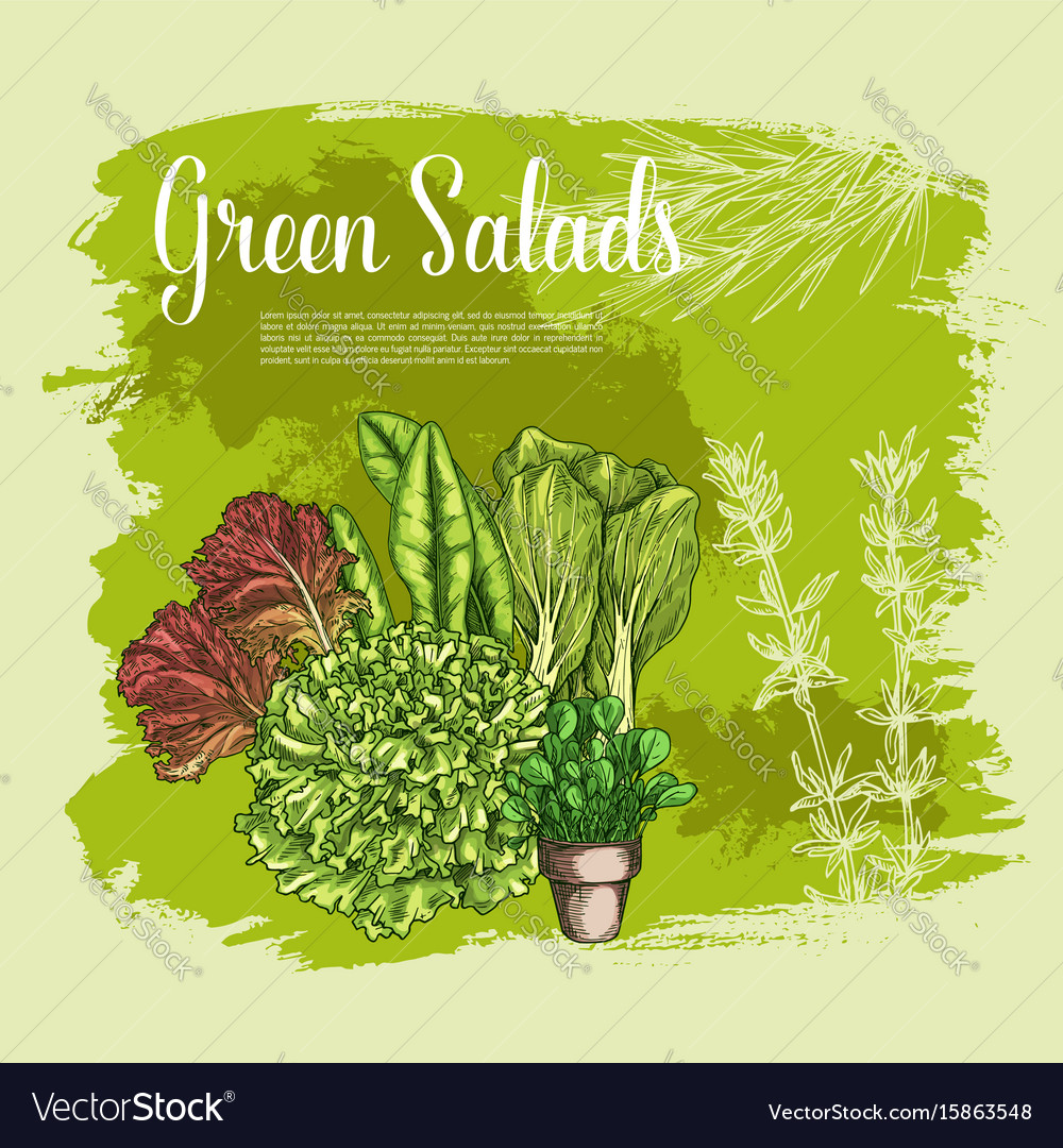 Poster of lettuce salads leafy vegetables
