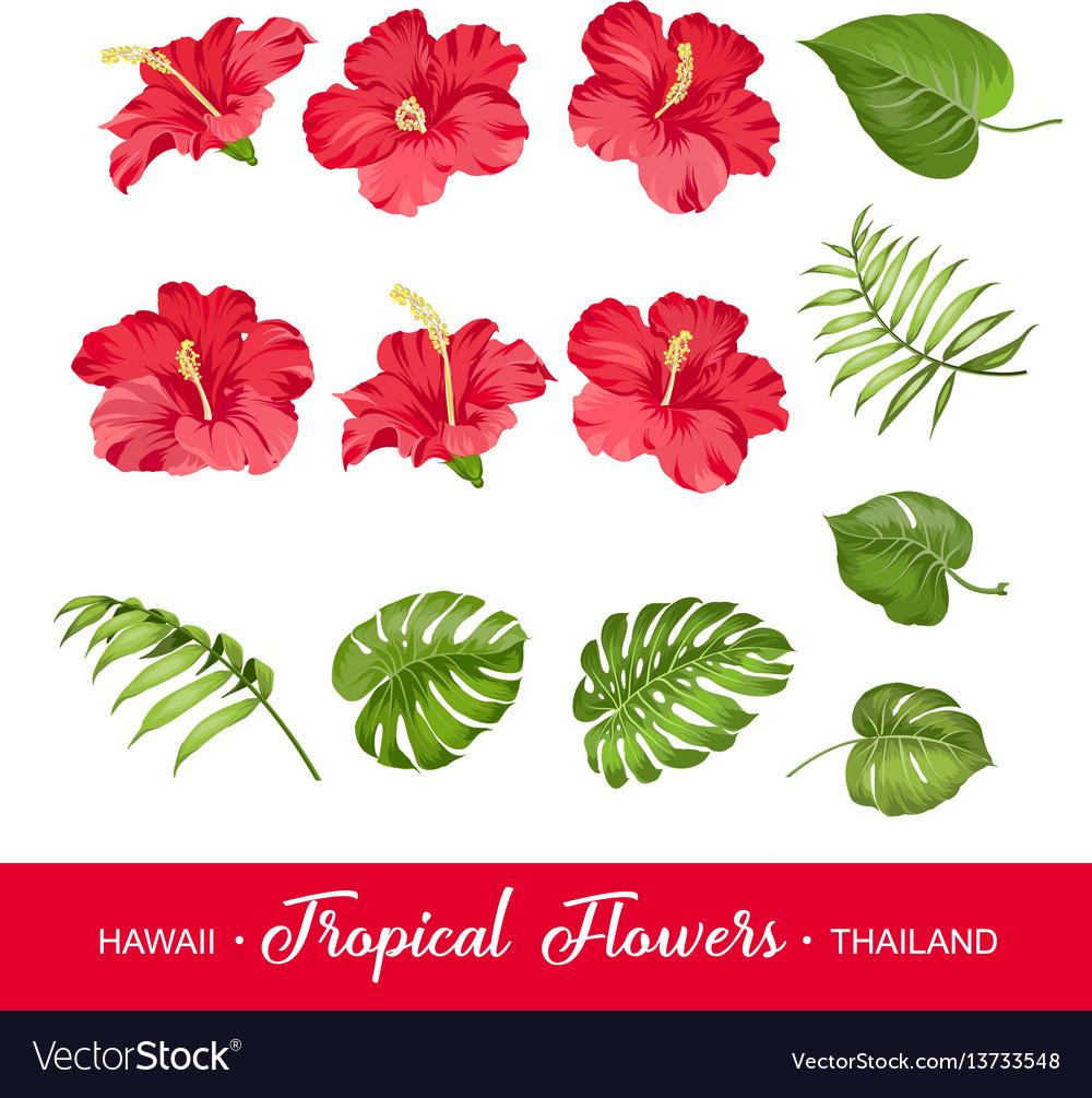 Set tropical flowers elements