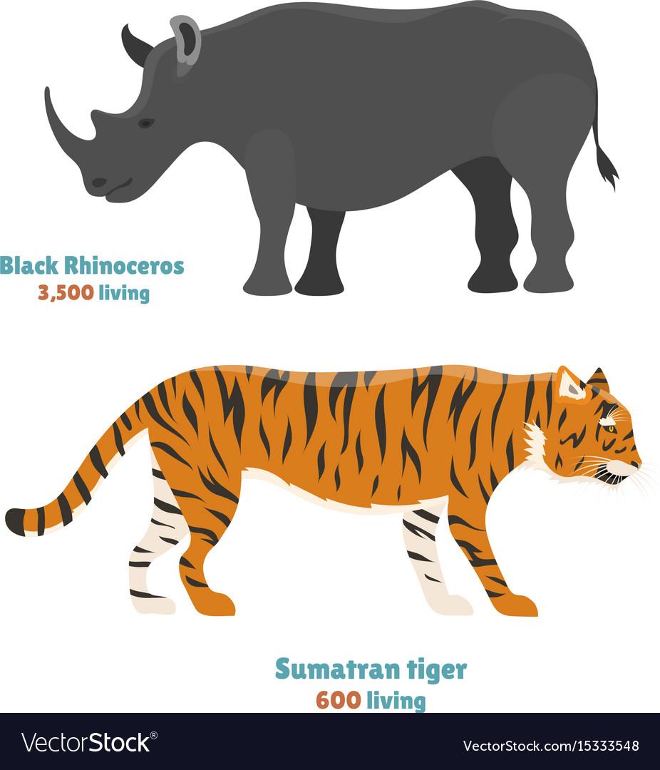 Tiger action wildlife animal danger rhinoceros