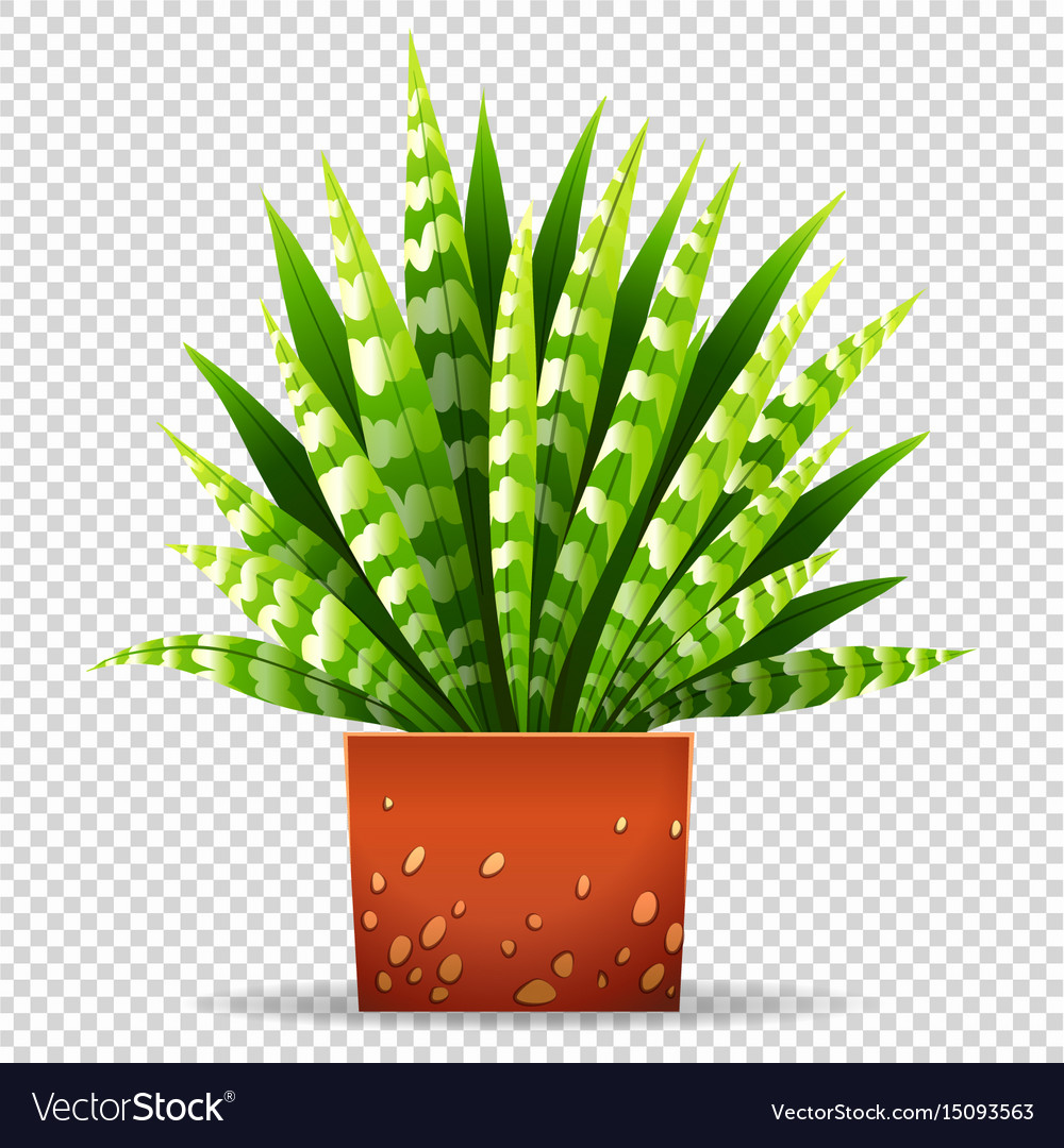 Plant in pot on transparent background Royalty Free Vector for potted plant transparent  111ane