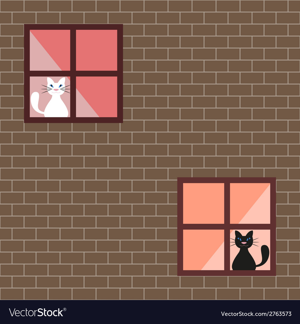 A cats in house windows