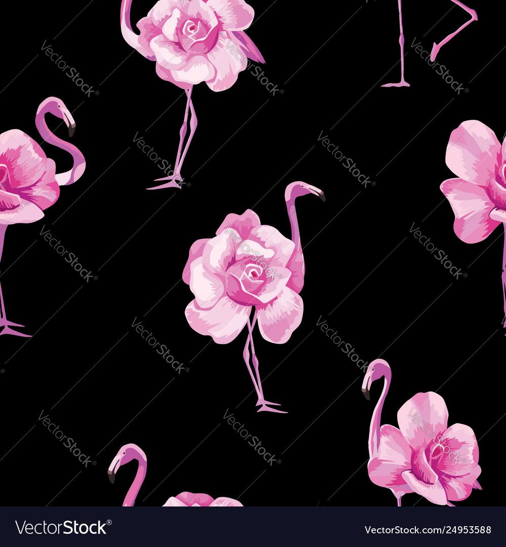 Flamingo rose black background