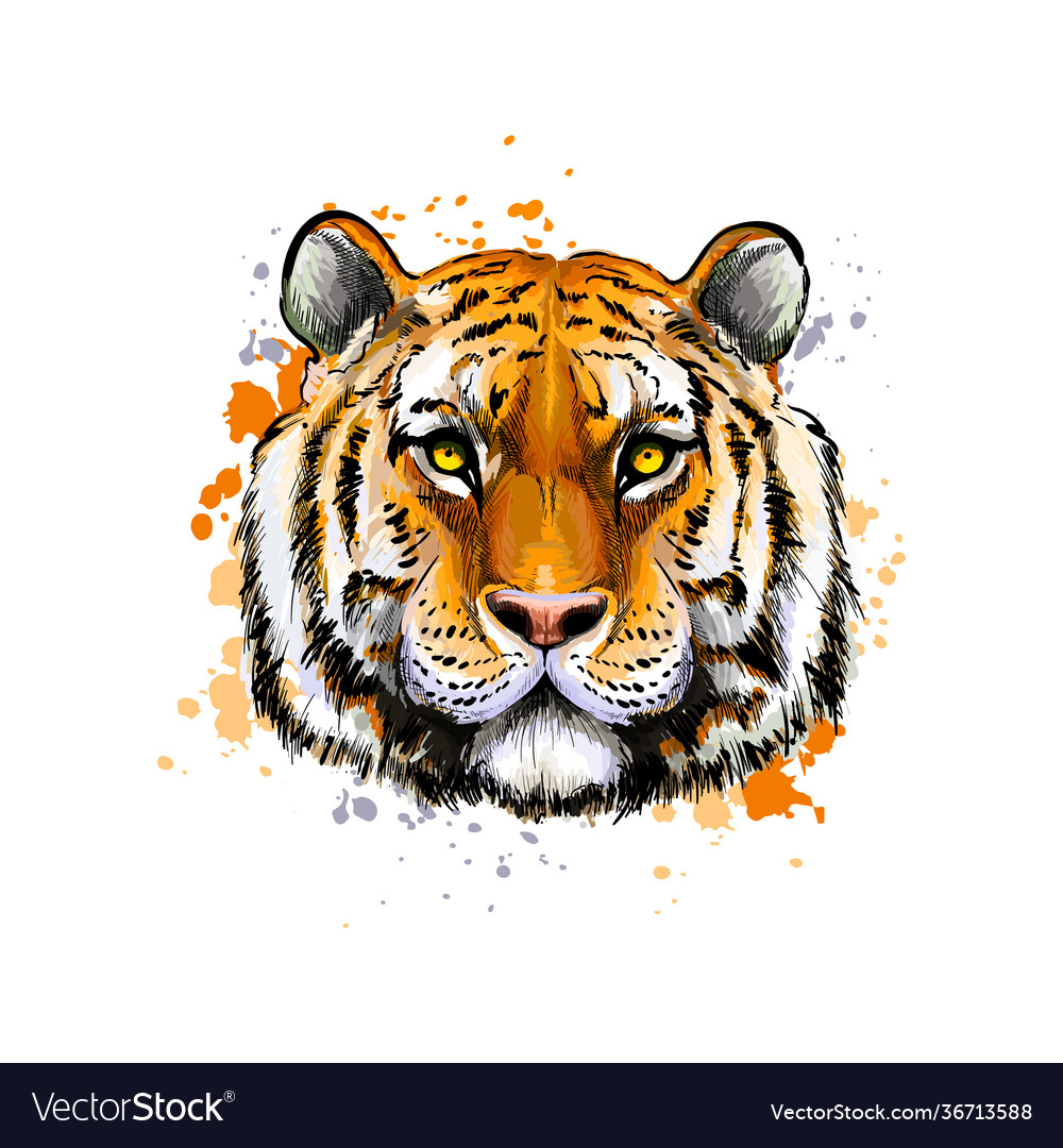 Tiger head portrait from a splash watercolor