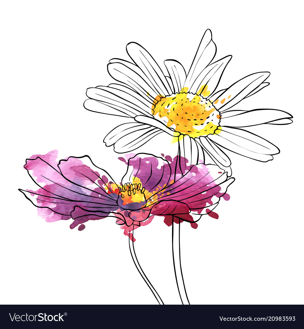 Drawing Flowers Of Daisy Royalty Free Vector Image