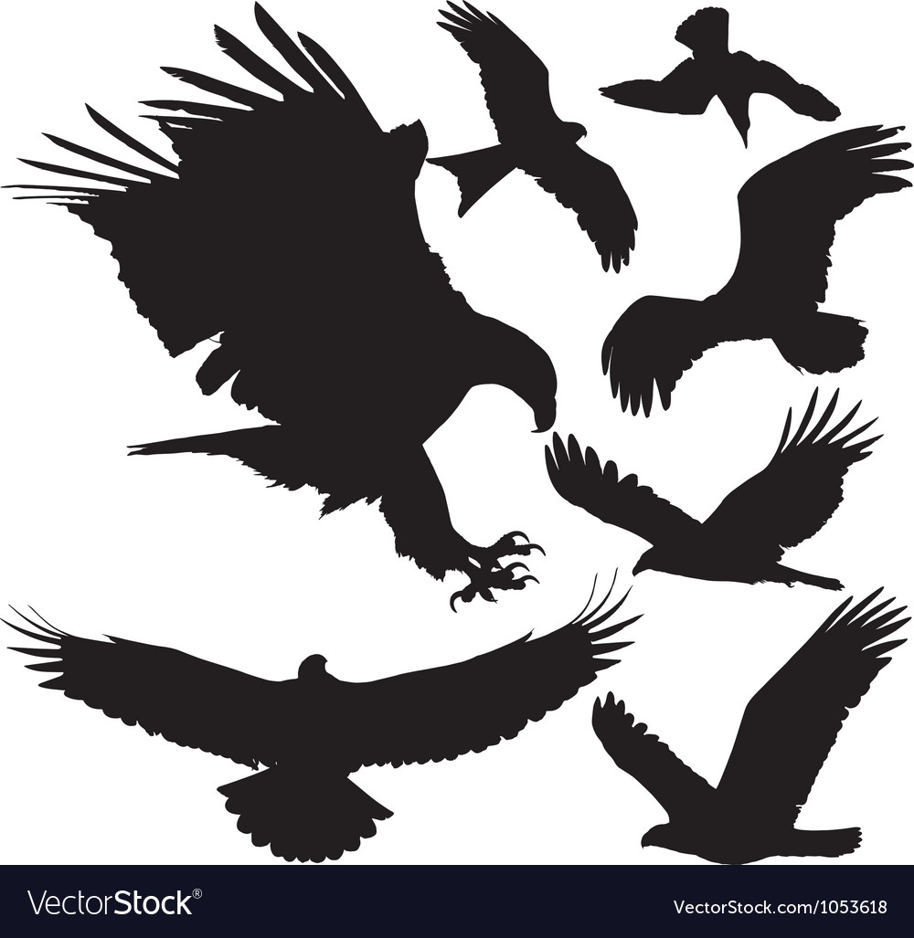 Birds of prey silhouettes
