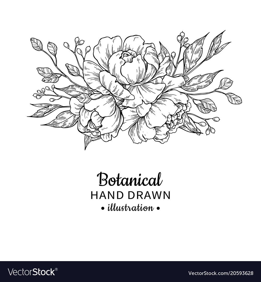 Wedding Flower Line Drawing : Vintage flower bouquet drawing peony royalty free vector
