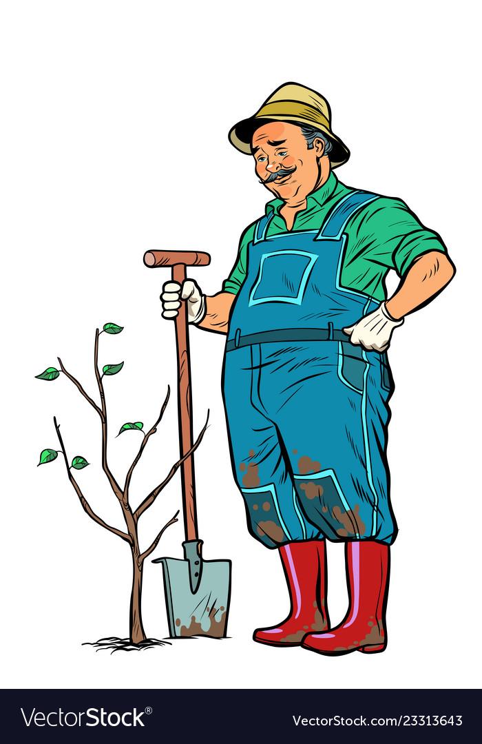 Old gardener plants a seedling isolate on white