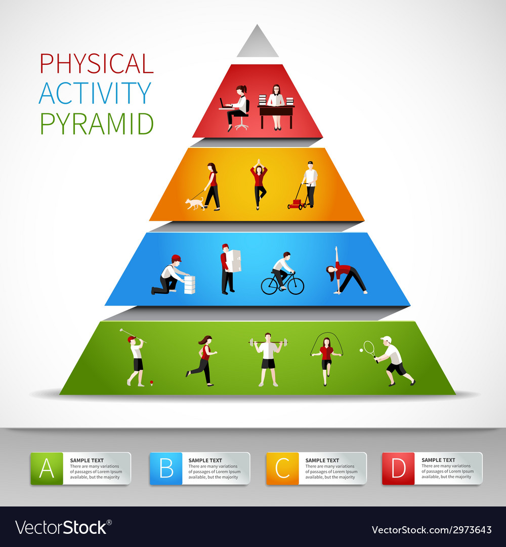Physical activity pyramid infographic vector image