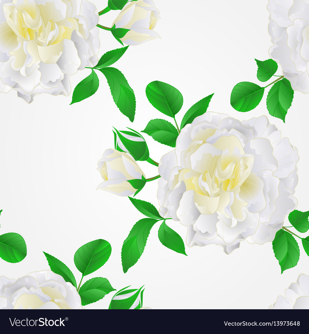 Seamless texture white rose with buds and leaves