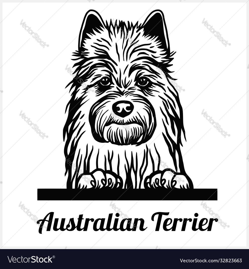 Australian terrier - peeking dogs - breed face