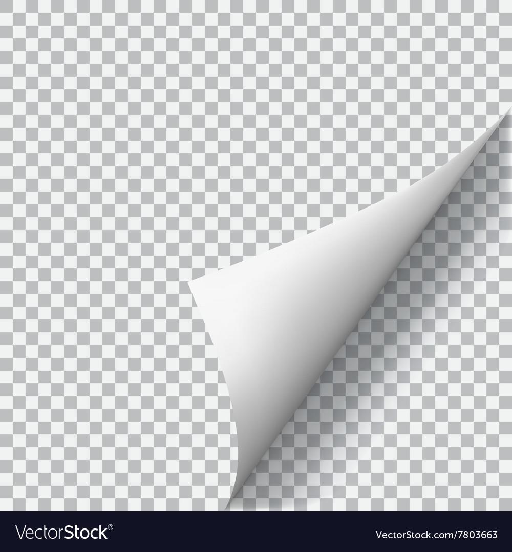 Curled corner of paper