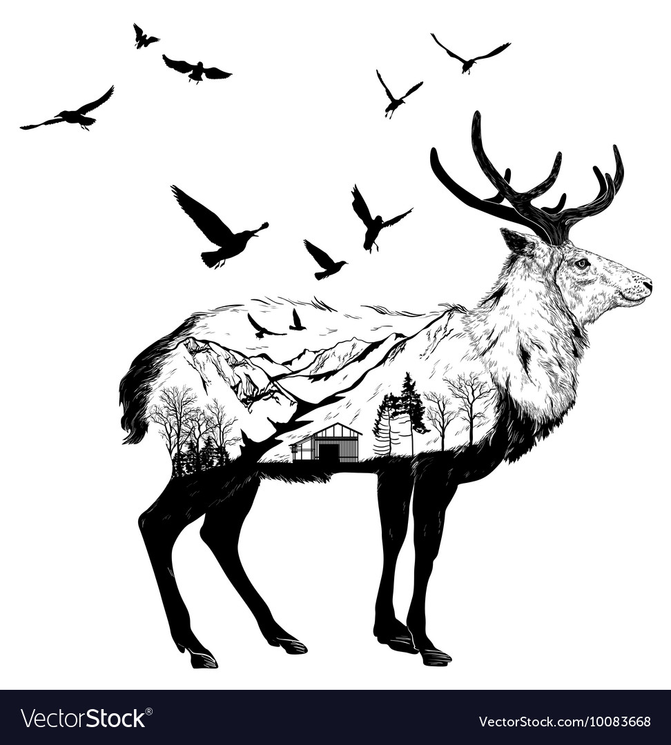 Hand drawn deer for your design wildlife concept vector