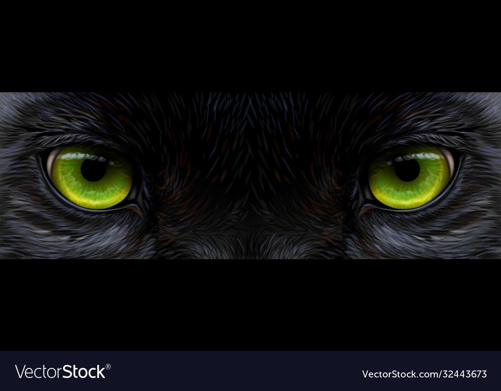 Big eyes panther black leopard eyes close-up