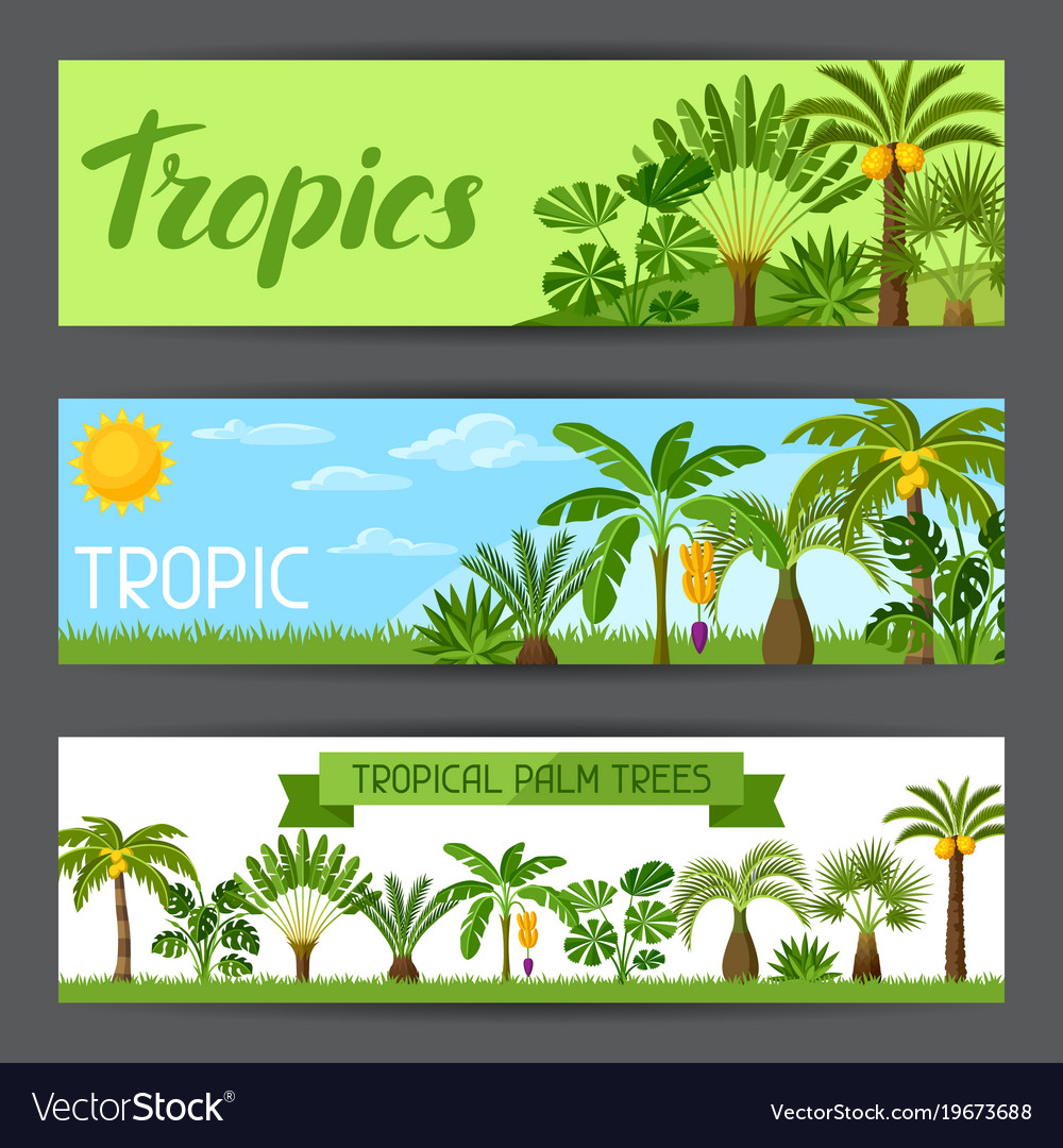 Banners with tropical palm trees exotic tropical
